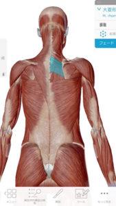 大菱形筋肉画像