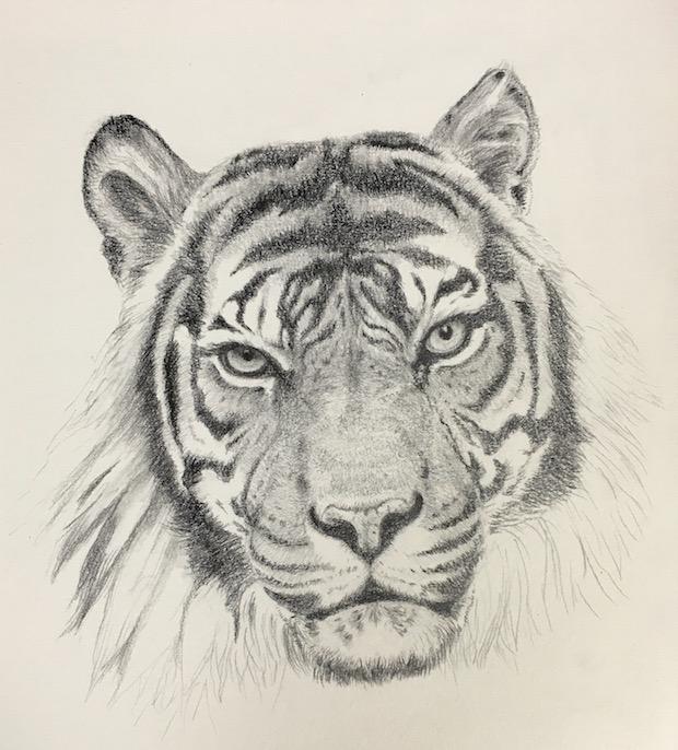 製作過程・Tiger
