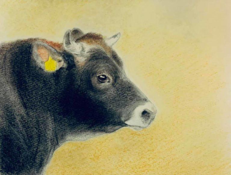 若い雄牛の首