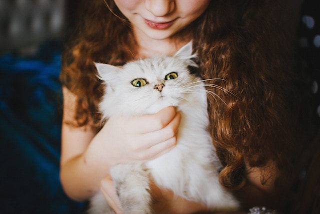 a silver tabby cat on a young girl's lap